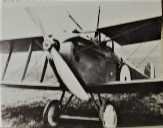 dolphin-1918-copy